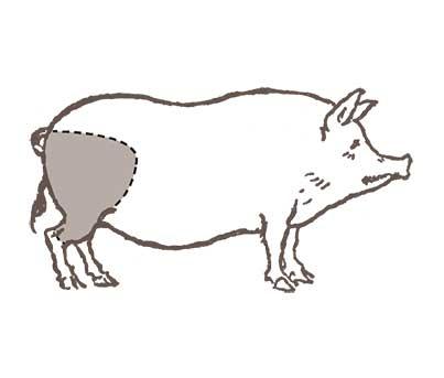 Boolarson-schede-Occhialino