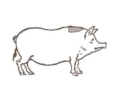 Boolarson-schede-Pluma